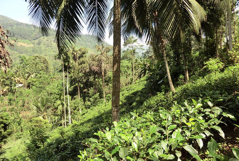 スリランカ デニヤヤの風景