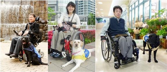 2013年4月現在、日本国内では67頭の介助犬が認定され活躍しています。そのうち24頭が日本介助犬協会所属となっています。