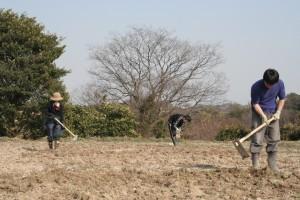 3人で耕作の様子