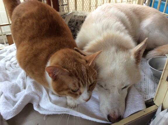 シェルター(ワンコニャンコハウス)の救った仲良し犬猫