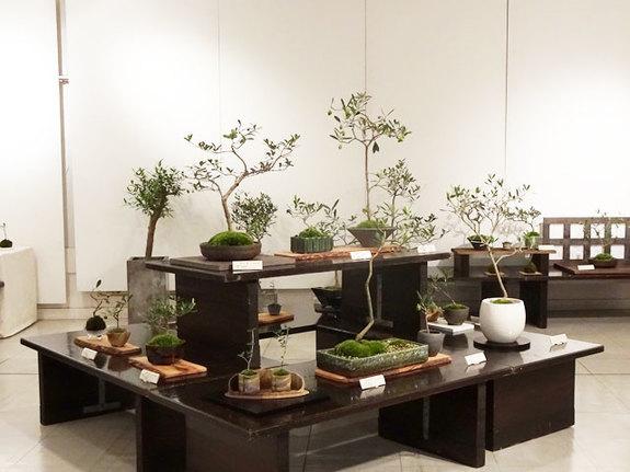 2015『オリーブの盆栽展』展示の様子