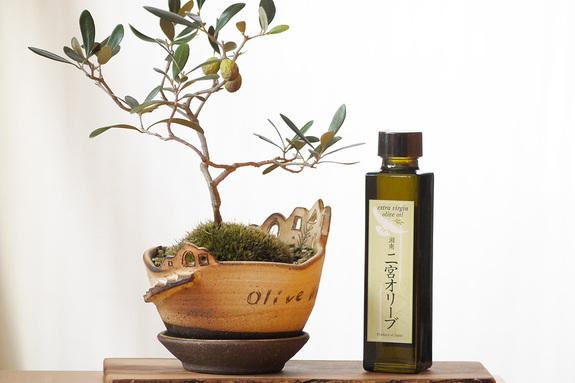 ユニバーサル農場で収穫されたオリーブの実から作られたオリーブオイル『湘南二宮オリーブ 2015』