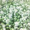 Thumb 356658146efe6c48079d45c3194b236bdb4680e3