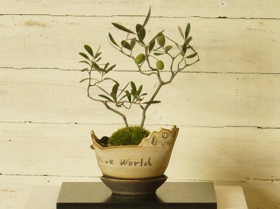 陶芸作家・濱村裕子さんの鉢にオリーブを植え込んだ時のワクワク感、今も思い出します!