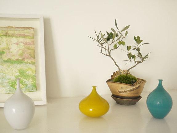 和にも洋にもあう「オリーブ」は、現代のライフスタイルに自然に溶け込む盆栽樹です!