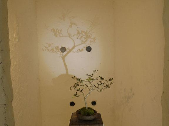 影を楽しむ!いままでと違った盆栽の楽しみ方も提案していいたいです