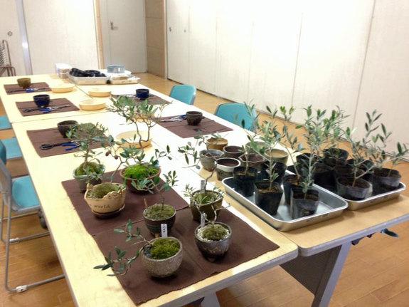 二宮で開催したオリーブの盆栽教室の会場