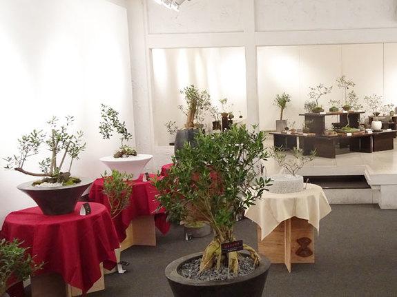 様々な作風が集まったオリーブの盆栽展。この世界観を常設展示場で再現したい!