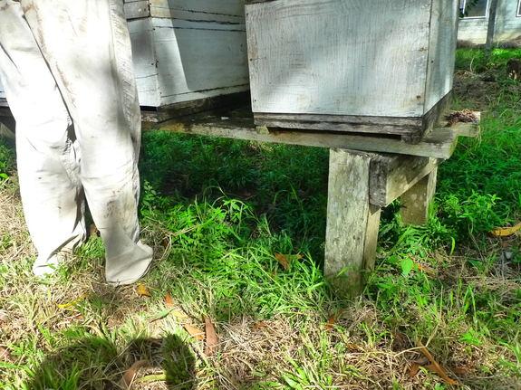 高さ調整されたハチミツ巣箱