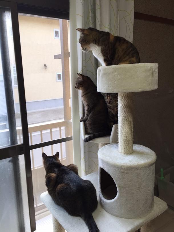 ご飯タイム♪、窓を網戸にすると一斉に窓に張り付く猫たち