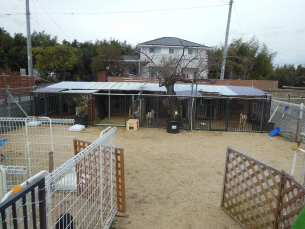 屋根がボロボロの犬舎