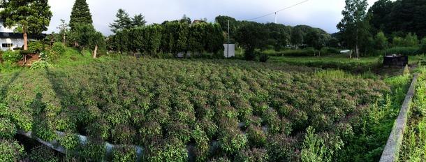 島松沢の畑