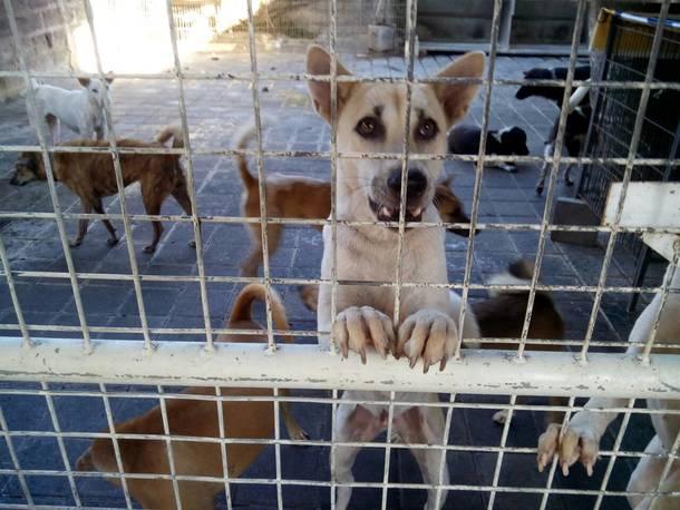 沢山の犬だけでなく、色んな動物が保護されます。