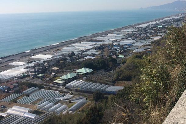 久能山から見えるいちご畑と太平洋
