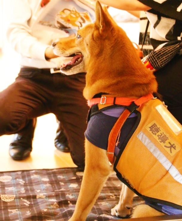 聴導犬レオン