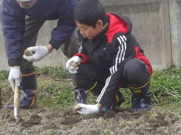 2013春の活動でじゃがいもを植えた時の様子