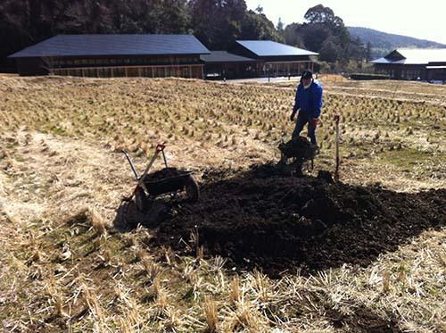 牛堆肥の元肥をまきました