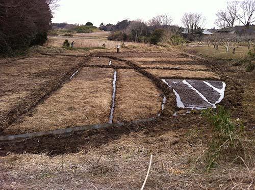 2014年には自然農の田んぼで活用