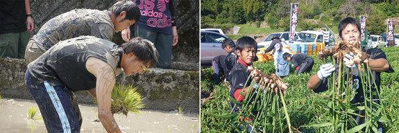左:泥だらけになって田植え作業を行う選手 右:野菜の収穫を行う選手