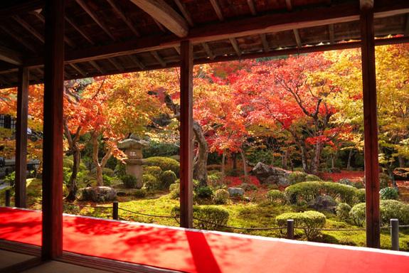 400年を迎える京都高瀬川でプロ...