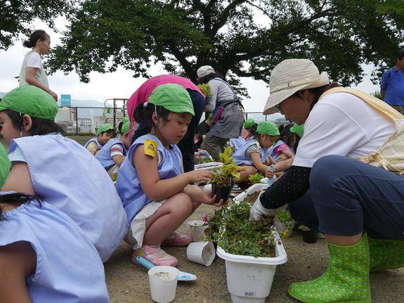 2011年から被災地に花を植える活動をしています