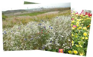被災地で咲いた花のポストカード(一例)
