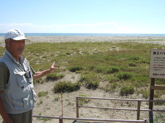 閖上地区の海浜植物の様子