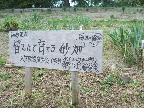 植松入生仮設住宅団地の海砂花壇