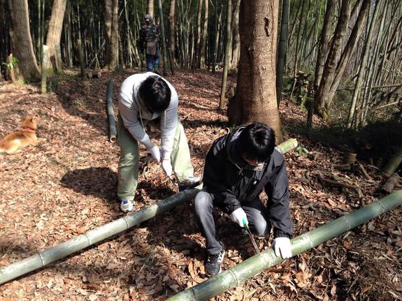 よっちゃん農場(七夕村)竹切出し