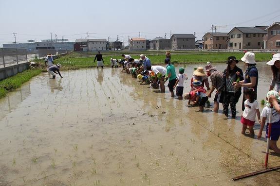 農業体験(田植えの風景)
