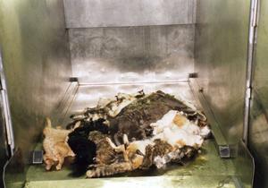 環境省が最新の犬猫引き取り状況を発表。殺処分数 …