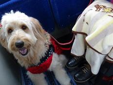 もっと日本をやさしくするための「ほじょ犬サミット」を6月開催