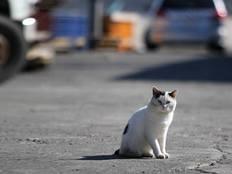 行き場のない猫たちに温もりのある保護施設を作りたい!