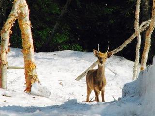 尾瀬で駆除されるだけの鹿の命を活かす!鹿革を使った商品造り!