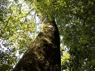 世界自然遺産屋久島から電線・電柱をなくすための調査をします!
