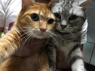 里親探しのウェブサイトを作成し、多くの動物たちを救いたい!!