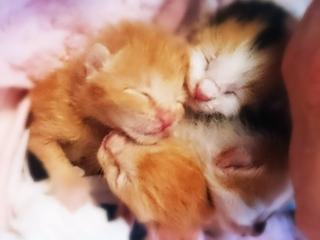 飼い主のいない子猫を保護し、里親さんに繋げる活動を続けたい。