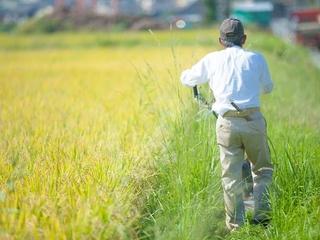 豊後高田の若手生産者の販売拠点となるサイトを制作します!