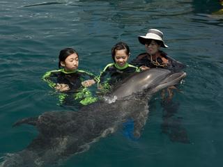 イルカのフラフで室戸を盛り上げイルカにふれあう機会つくりたい
